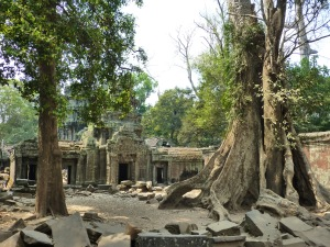 Ta Prohm: a temple taken over by the jungle