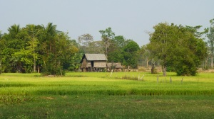 Beautiful rice paddies