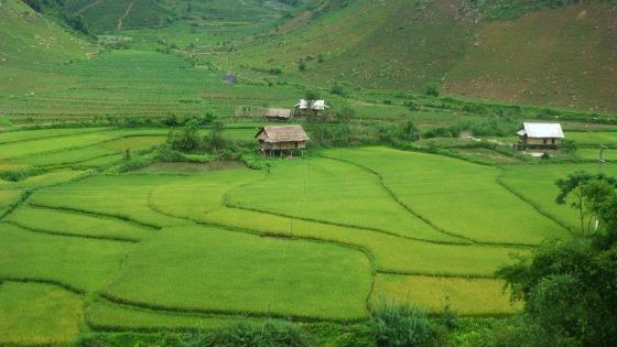 Artful rice paddies