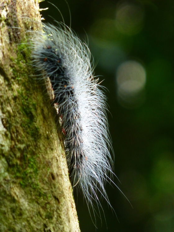 A poisonous caterpillar