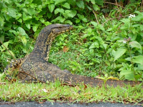 A huge lizard