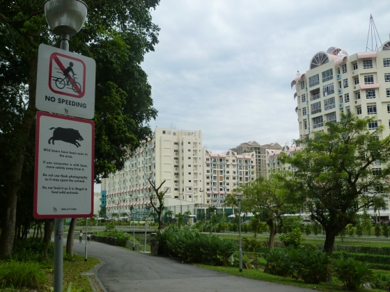 Wild boar in Singapore. Seriously?!?