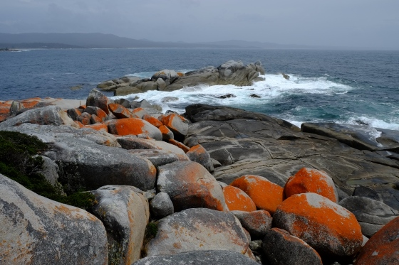 Bay of Fires, orange algae on the rocks are a typical characteristic in the bay