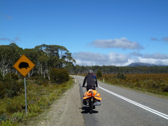 Watch for echidnas and cyclists!