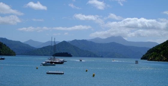 The Marlborough sounds seen from the land