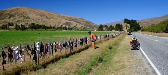 Kiwi fence art